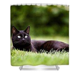 Black Cat Lying In Garden Shower Curtain
