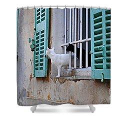 Black Cat White Cat Shower Curtain by Maja Sokolowska