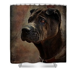 Black Chinese Shar-pei Shower Curtain