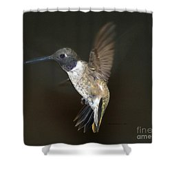 Shower Curtain featuring the photograph Black Chinned Hummingbird by Debby Pueschel