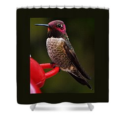 Shower Curtain featuring the photograph Black Chinned Male Hummingbird by Jay Milo
