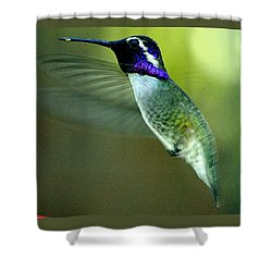 Shower Curtain featuring the photograph Black Chinned Male In Flight To Feeder by Jay Milo