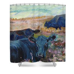 Black Cows On Dartmoor Shower Curtain