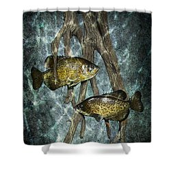 Black Crappies A Fish Image No 0143 Blue Version Shower Curtain