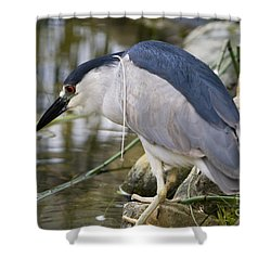 Shower Curtain featuring the photograph Black-crown Heron Going Fishing by David Millenheft