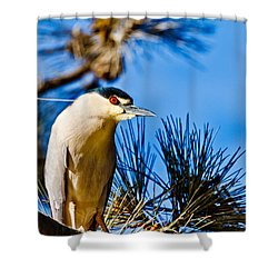 Black Crowned Night Heron Shower Curtain