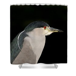 Black-crowned Night Heron Shower Curtain by Bob and Jan Shriner