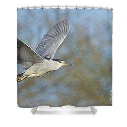 Black- Crowned Night Heron Shower Curtain by Bryan Keil