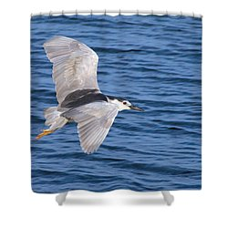 Black Crowned Night Heron In Flight Shower Curtain