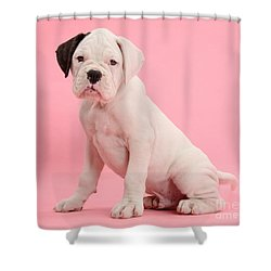 Black Eared White Boxer Puppy Shower Curtain by Mark Taylor