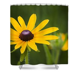 Black Eyed Susan Shower Curtain by Adam Romanowicz