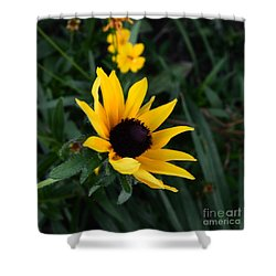 Shower Curtain featuring the photograph Black-eyed Susan Glows With Cheer by Luther Fine Art