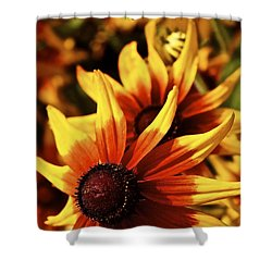 Shower Curtain featuring the photograph Black Eyed Susan by Linda Bianic