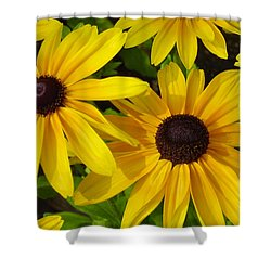 Shower Curtain featuring the photograph Black Eyed Susans by Suzanne Gaff