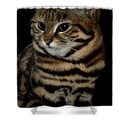 Black-footed Cat Shower Curtain by Maria Urso