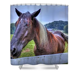 Black Horse At A Fence Shower Curtain by Jonny D