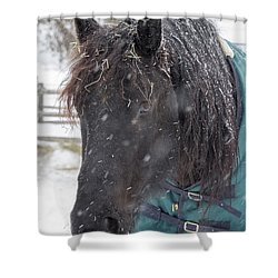 Black Horse In Snow Shower Curtain