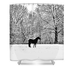 Black Horse In The Snow Shower Curtain by Bill Cannon