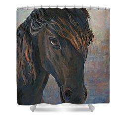 Black Horse Shower Curtain by Marco Busoni