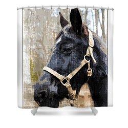 Black Horse Shower Curtain by Susan Leggett
