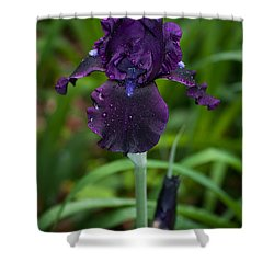 Black Iris Shower Curtain by Penny Lisowski