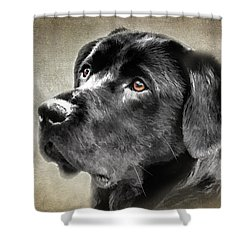 Black Lab Portrait Shower Curtain by Eleanor Abramson