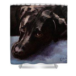Black Labrador - Custom Pet Portrait Shower Curtain