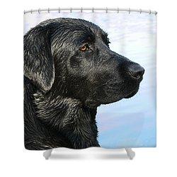 Black Labrador Retriever After The Swim Shower Curtain