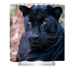 Black Leopard Shower Curtain by Mark Newman