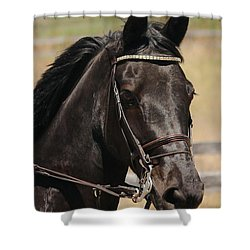 Black Mare Portrait Shower Curtain