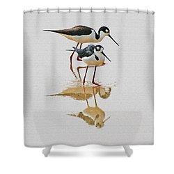 Black Neck Stilts Togeather Shower Curtain by Tom Janca
