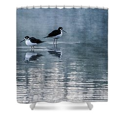Black-necked Stilts Shower Curtain by Tam Ryan