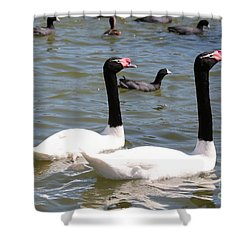 Black-necked Swans Shower Curtain by Carol Groenen