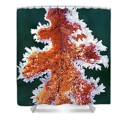 Shower Curtain featuring the photograph Black Oak Leaf Rime Ice Yosemite National Park California by Dave Welling