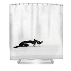 Shower Curtain featuring the photograph Black On White by Lisa Parrish