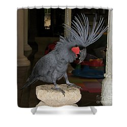 Black Palm Cockatoo Shower Curtain by Sergey Lukashin