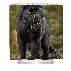 Black Panther Shower Curtain