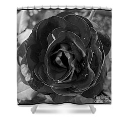 Shower Curtain featuring the photograph Black Rose by Nina Ficur Feenan