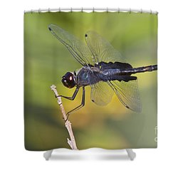 Shower Curtain featuring the photograph Black Saddlebags by Bryan Keil