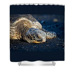 Black Sand Nap Shower Curtain by Denise Bird