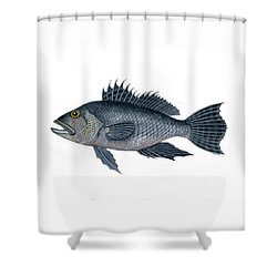 Black Sea Bass 3 Shower Curtain
