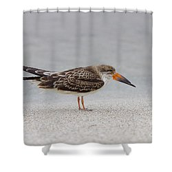 Black Skimmer Shower Curtain