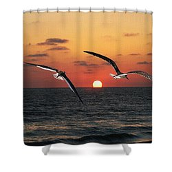 Black Skimmers At Sunset Shower Curtain by Tom Janca