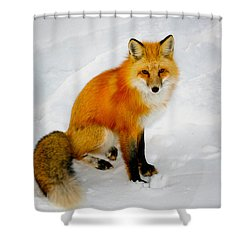 Black Socks Fox Shower Curtain by Juli Ellen