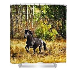 Black Stallion Runs Free Shower Curtain