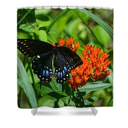 Black Swallow Tail On Beautiful Orange Wildlflower Shower Curtain by Peggy Franz