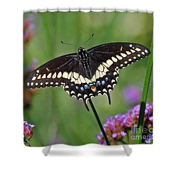 Black Swallowtail Butterfly  Shower Curtain