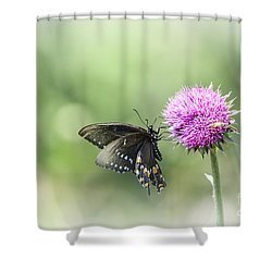Black Swallowtail Dreaming Shower Curtain by Debbie Green