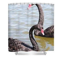 Black Swan Pair Shower Curtain by Carol Groenen