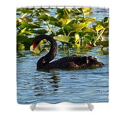 Black Swan Swimming Shower Curtain by Carol  Bradley